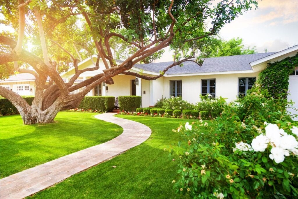 White ranch style house with beautiful landscaping, green grass, large tree, and roses