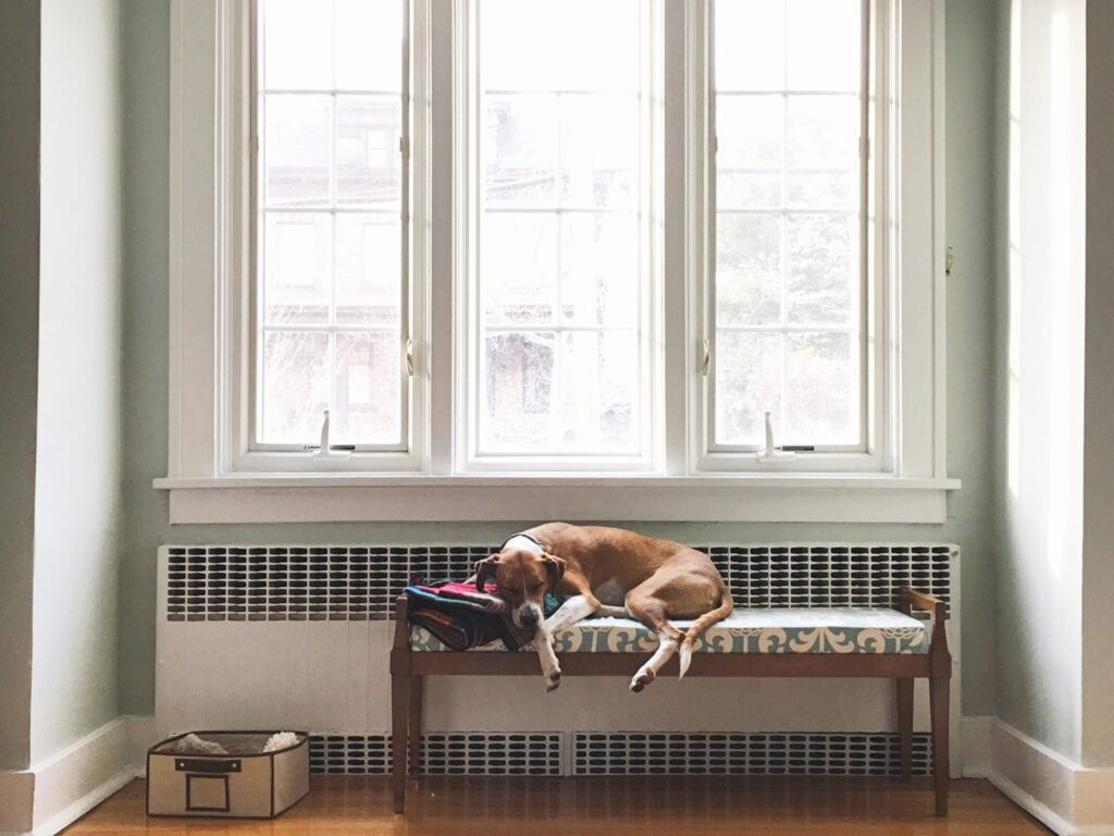 windows in three with a dog