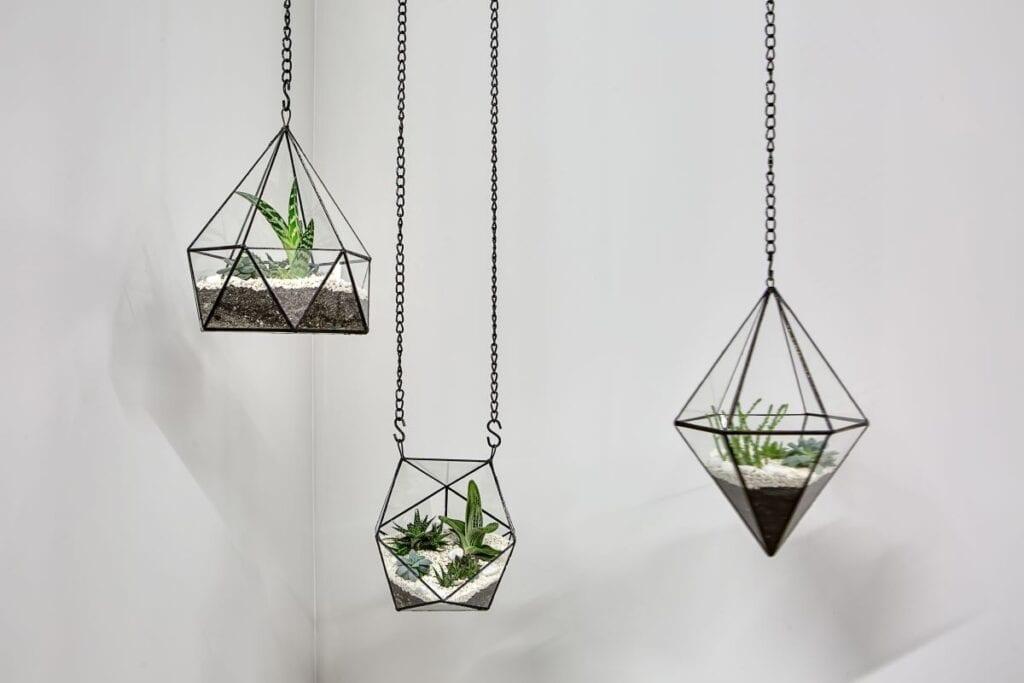 Three succulents in glass vases hanging in corner