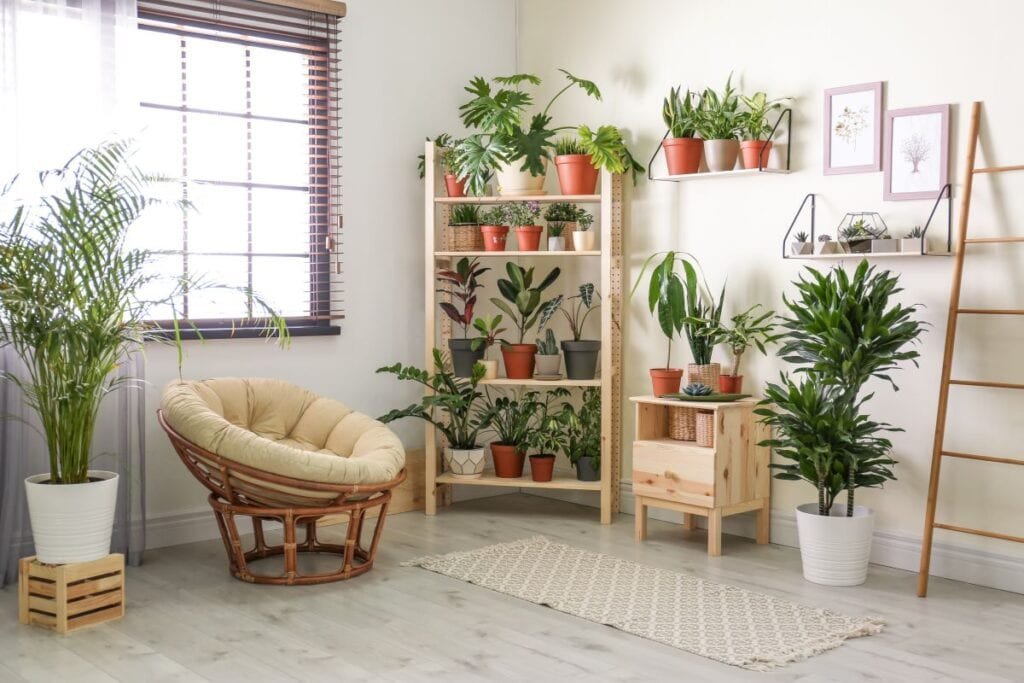 Room filled with indoor plants on shelves