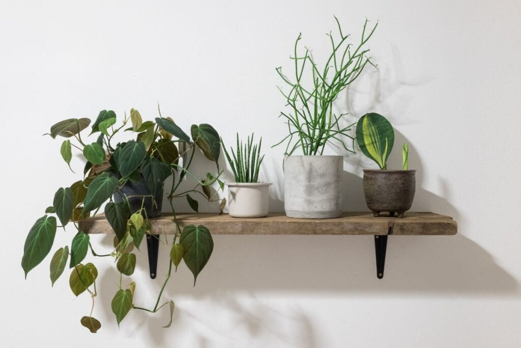 Wooden shelf with mixed house plants
