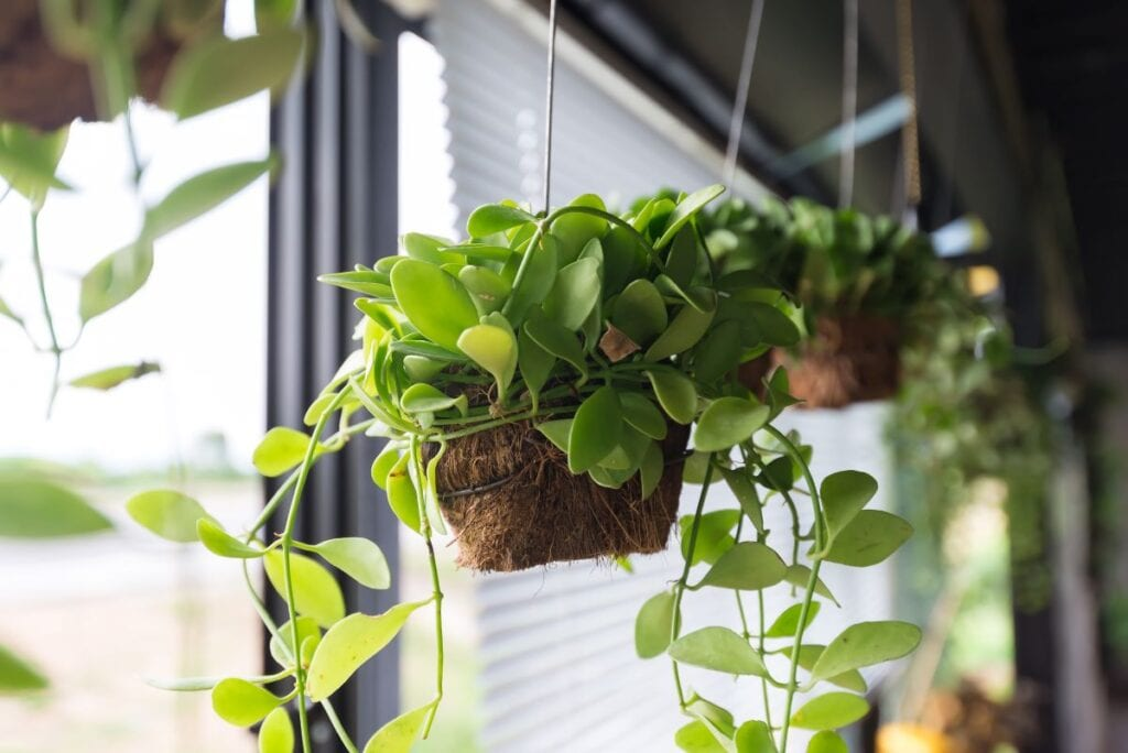 Plants hanging in window of a house