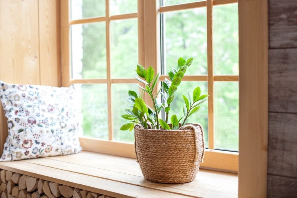 Indoor plant in basket planter on windowsill