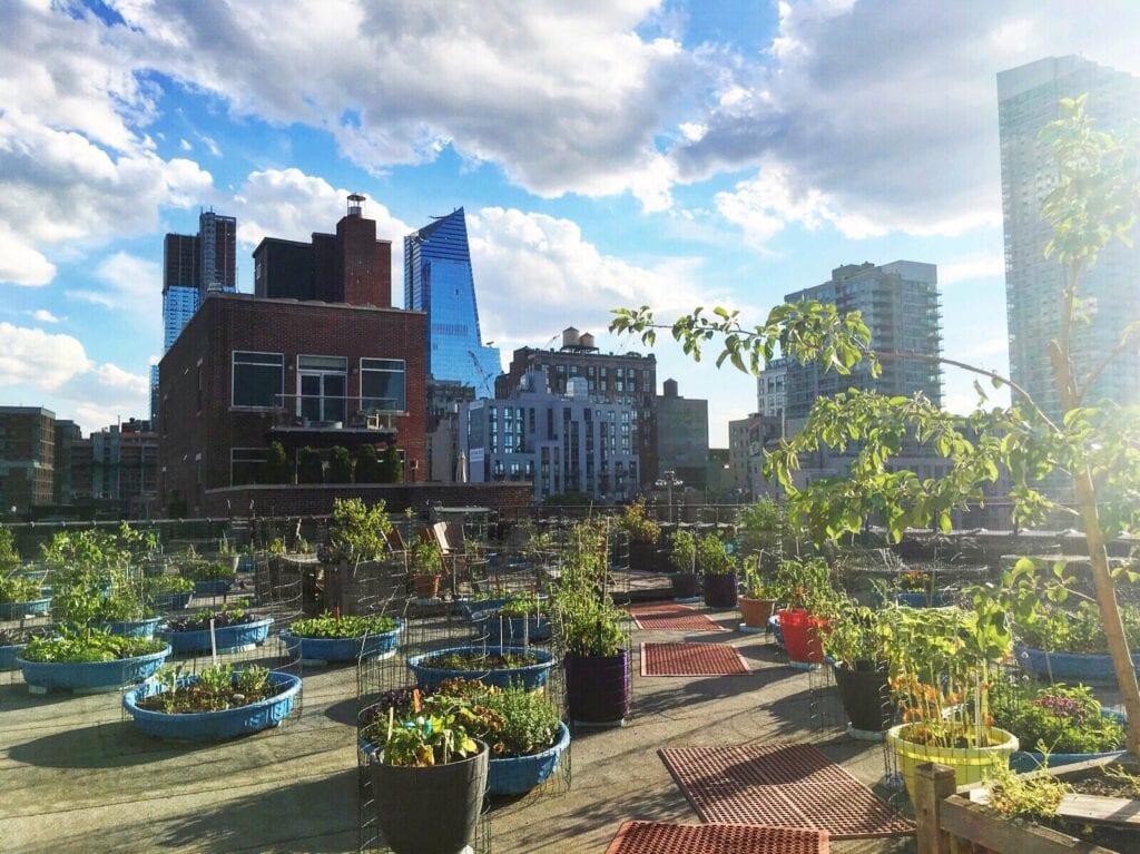rooftop garden NYC