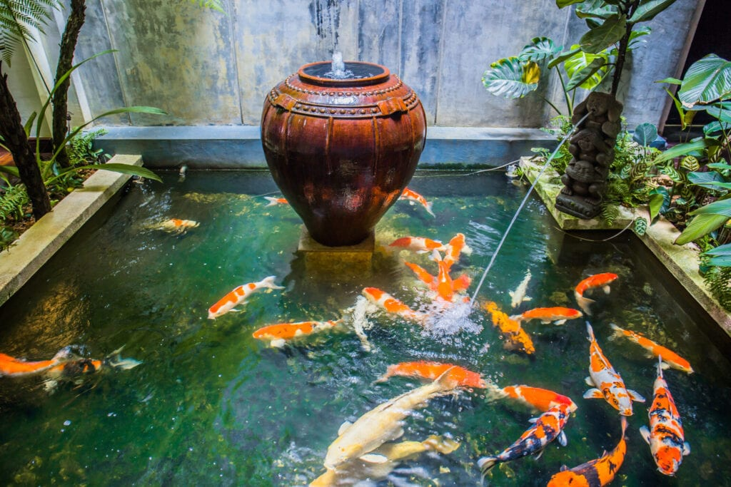 An indoor fish pond decoration with lots of Japanese Koi fish locate at a boutique hotel at Melaka, Malaysia.