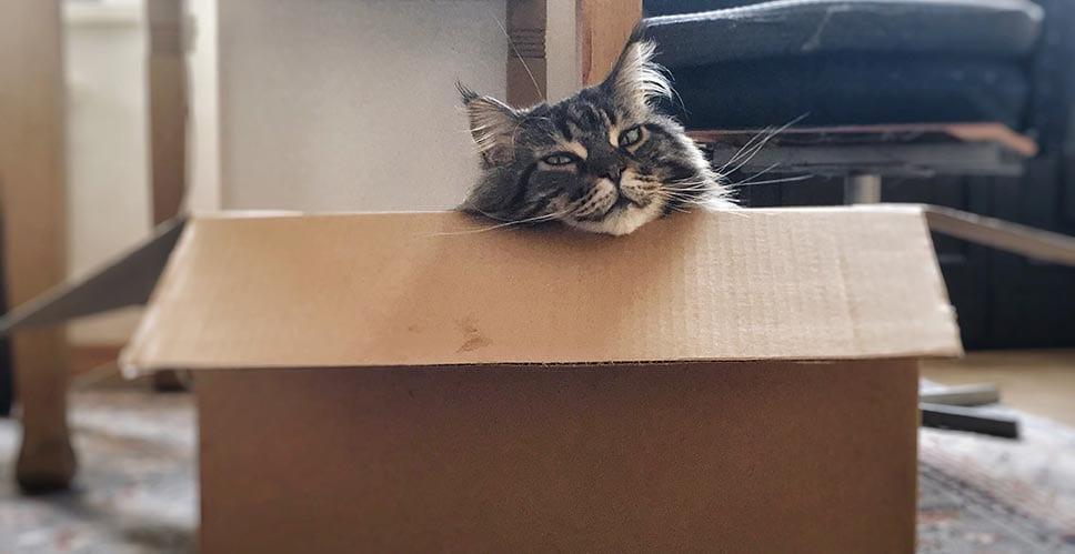 A dark brown cat sitting in a cardboard box