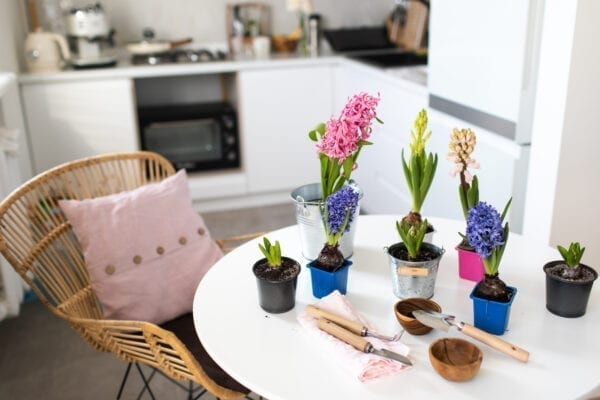 Gardening time at home. Indoor flower plants with rake and shovel on white table at home.  Spring Works. Earth Day.