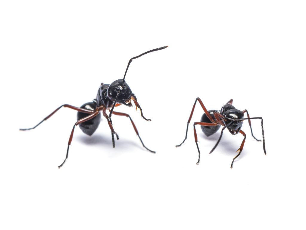 How To Get Rid Of Ants In Your House Step By Step Mymove
