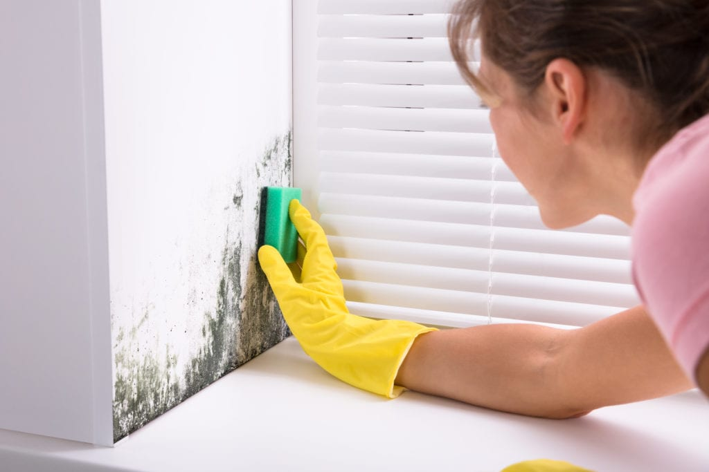 Woman wearing yellow gloves and cleaning mold from wall
