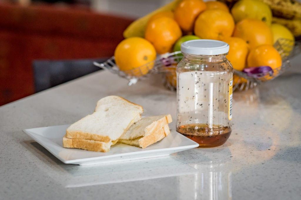 ants on jar of honey in kitchen- how to get rid of ants