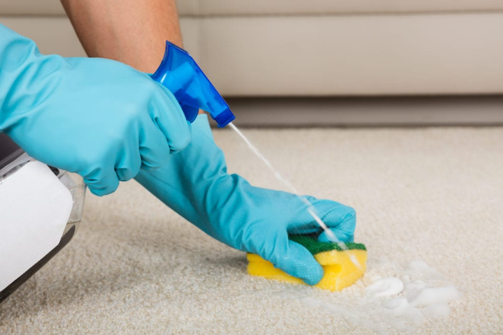 Person cleaning carpet with blue gloves, spray bottle, and sponge