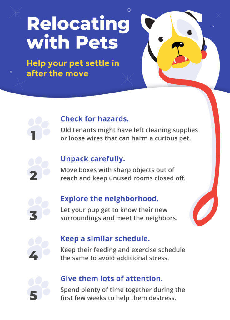 How to help your pet settle into your new home after the move.