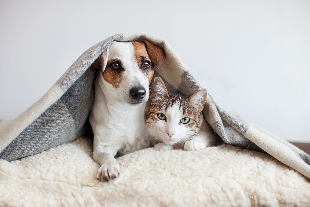 dog and cat under blanket together