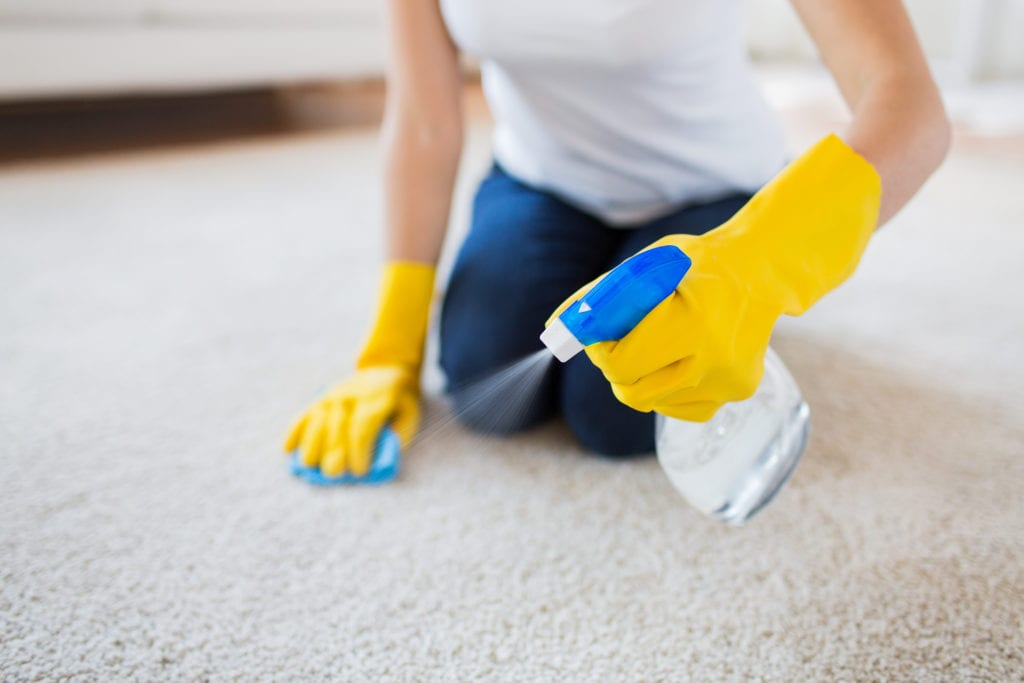 Woman cleans and scrubs her carpet.