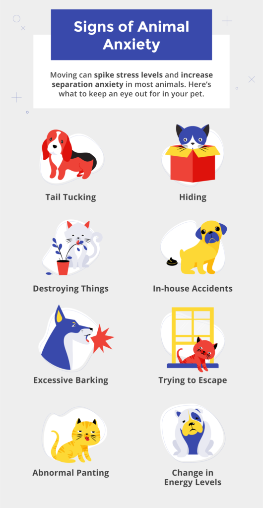 How to detect signs of pet anxiety.