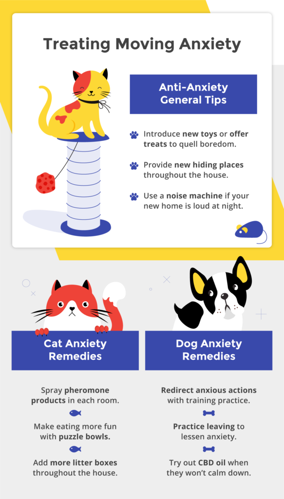 How to treat pet anxiety.