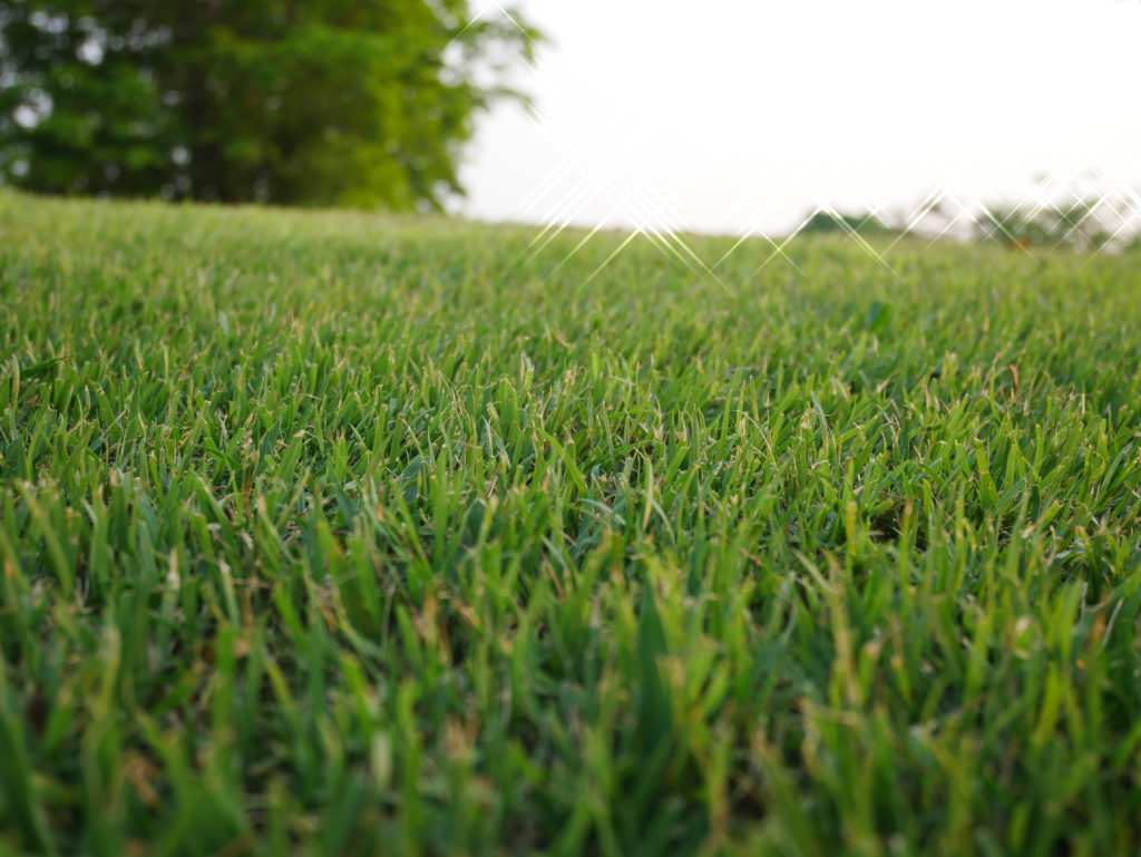 Closeup of bermuda grass lawn