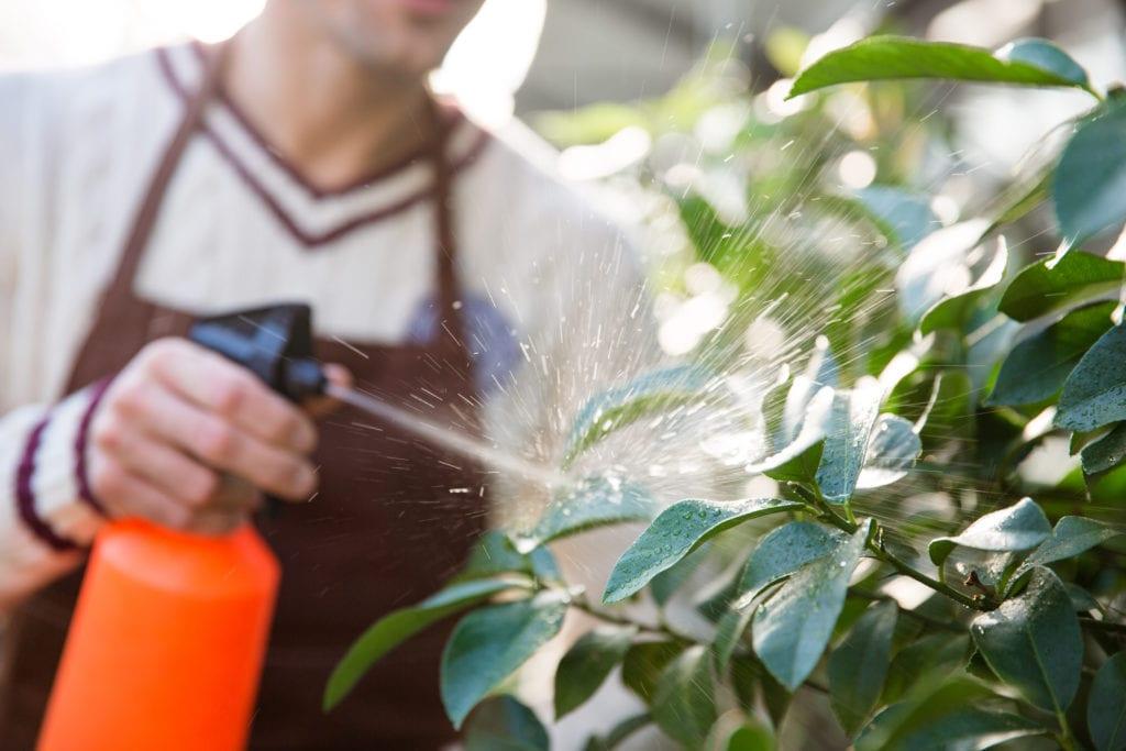 Man spraying plants from orange spray bottle