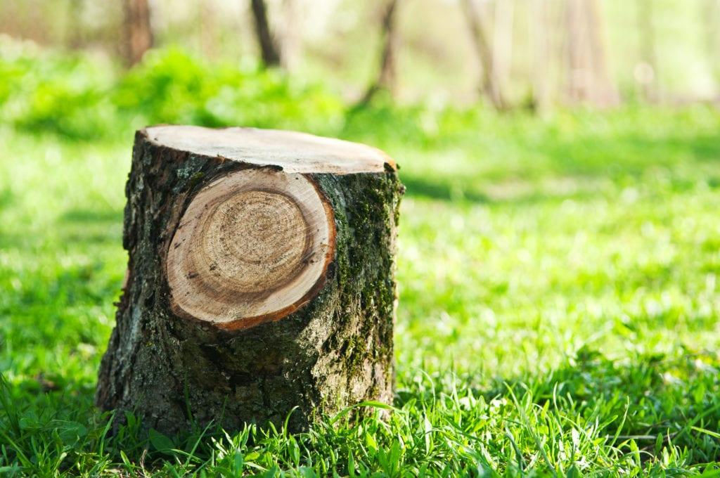 Tree stump in lush green lawn