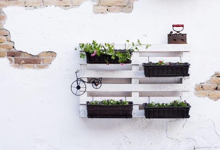 Pallet used for backyard vertical garden