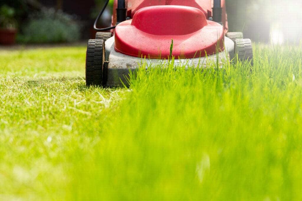 Red lawn mower cutting grass, close up of cut grass