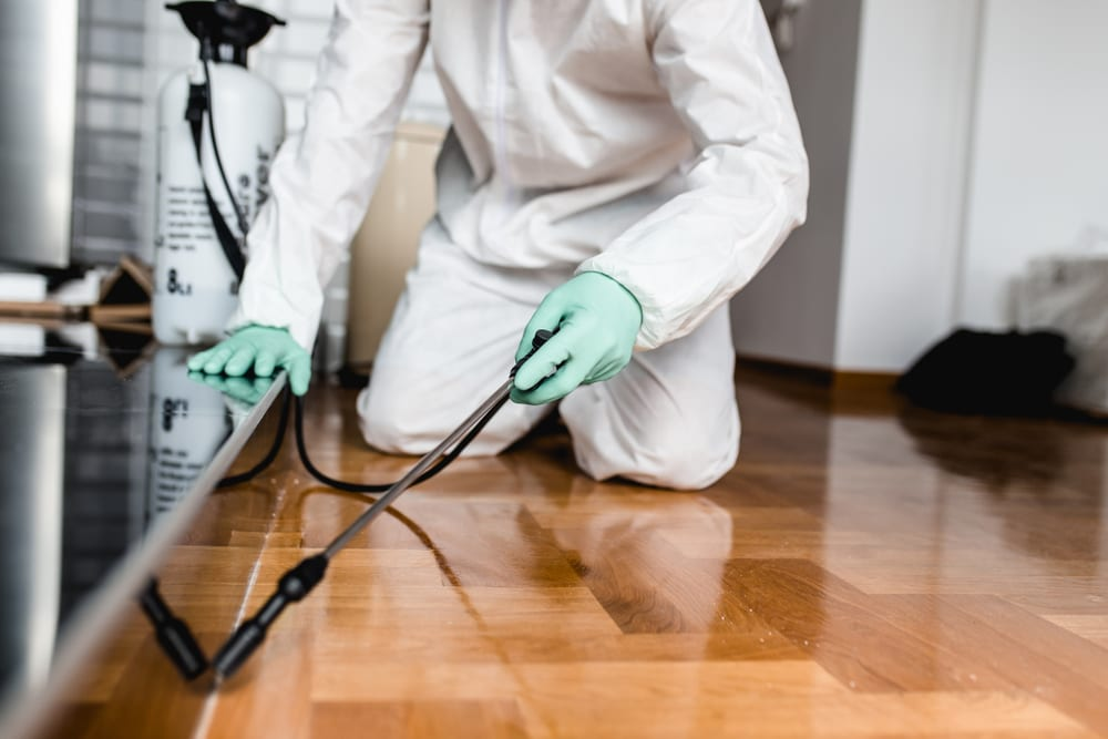 Pest control near me, exterminator getting rid of pests