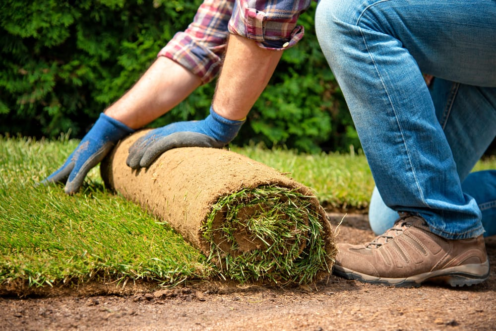 Man lays sod in his front yard