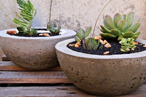 Succulents in cement planter