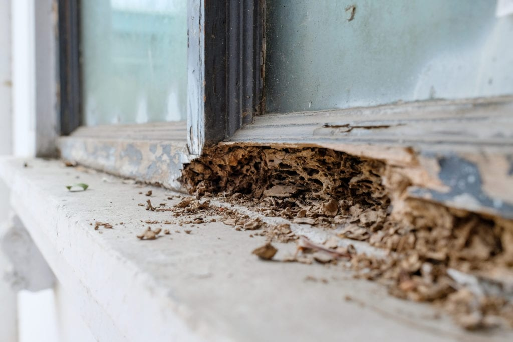 Close up of window frame that has been damaged by termites
