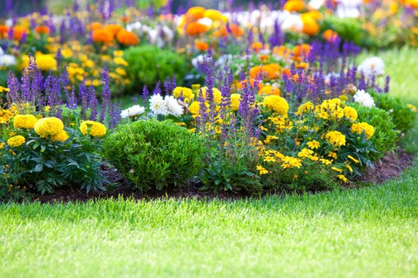 multicolored flowerbed on a lawn.