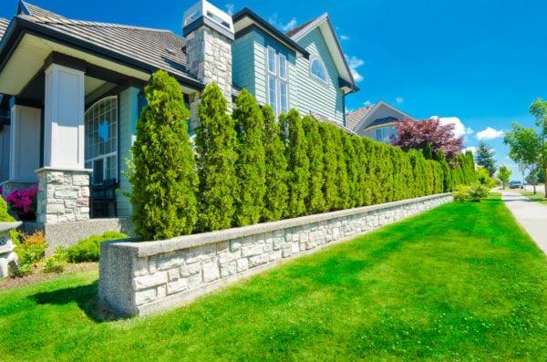 Privacy hedges alongside luxurious house