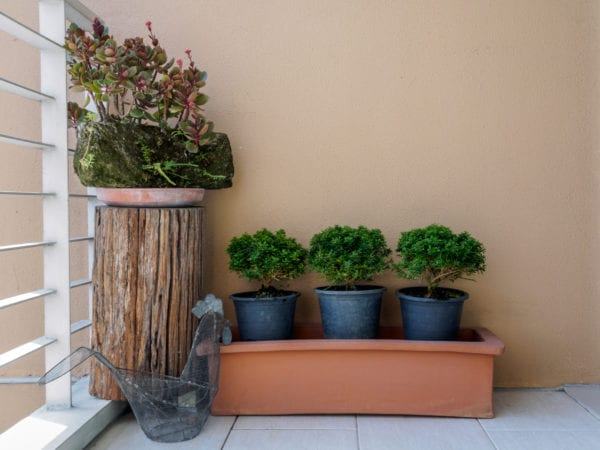 Succulent in rock flowerbed built on modern small roof garden