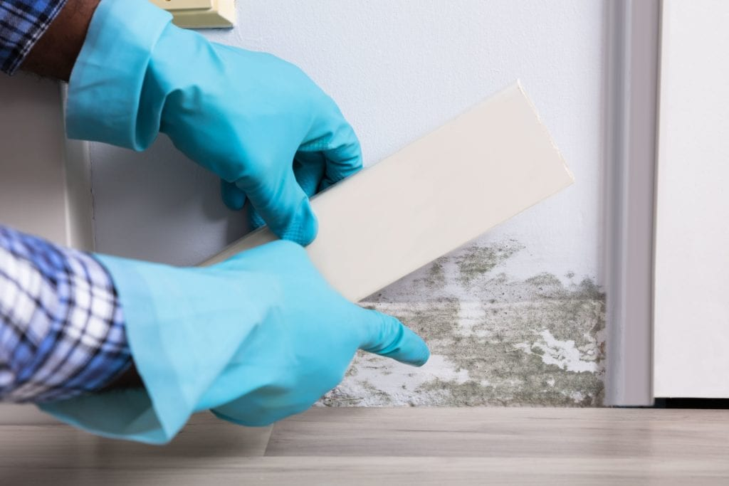 Close-up Of A Person Hand Wearing Gloves Checking Moldy Wall At Home