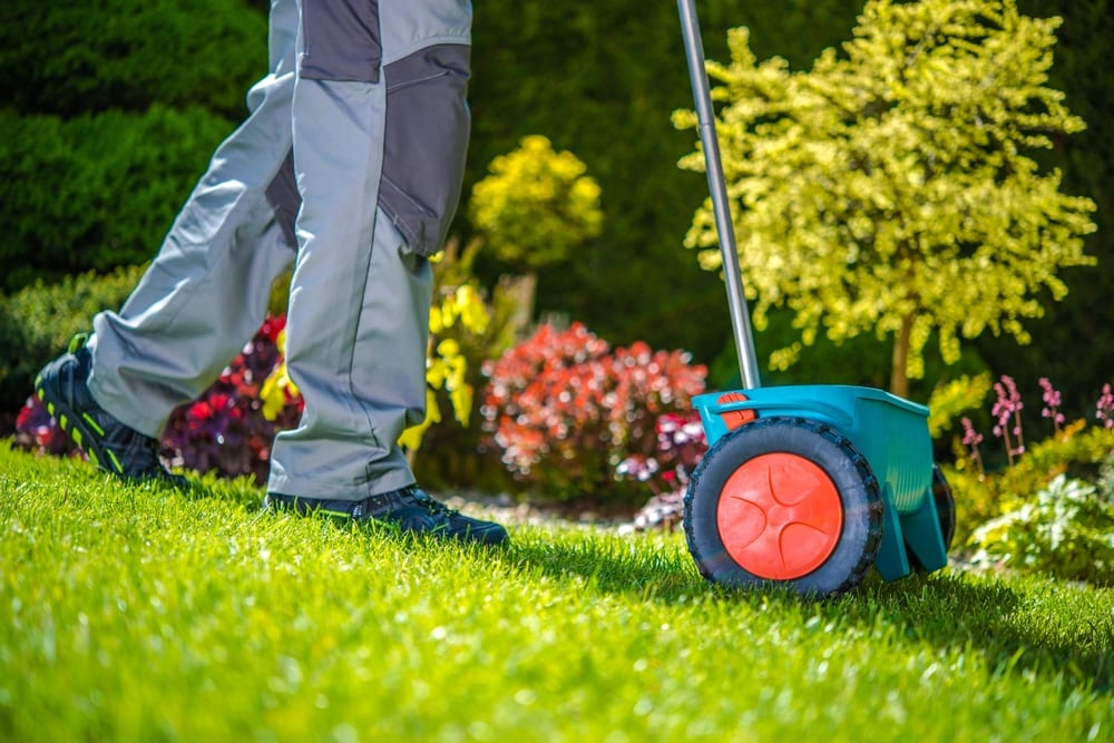 Man reseeds his lawn during the spring