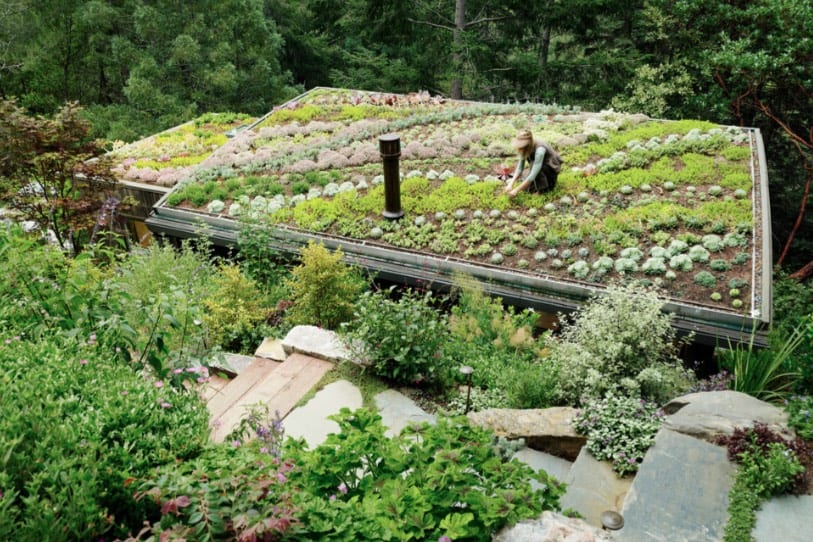 Here S Why You Ll Want A Living Green Roof On Your Home