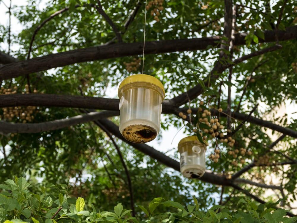 Organic Pest Control Bug Trap Outdoors