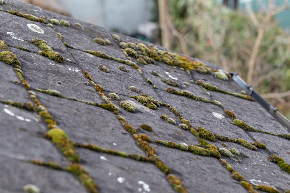 Replace Your Roof Moss on Roof