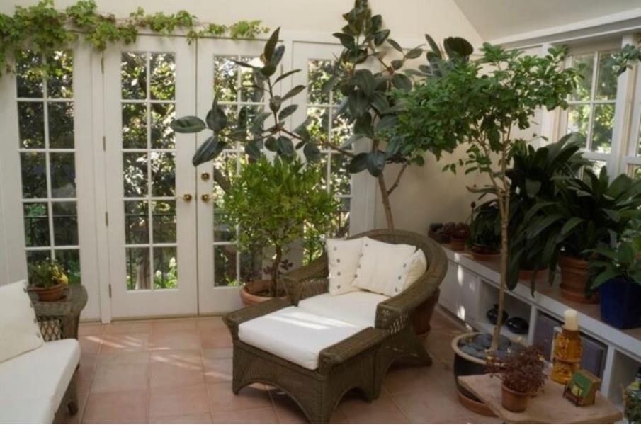 Sunroom plants