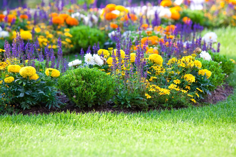 garden color palette - complementary