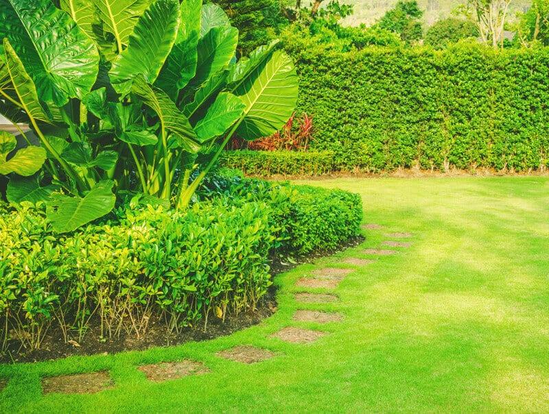 garden color palette - monochrome