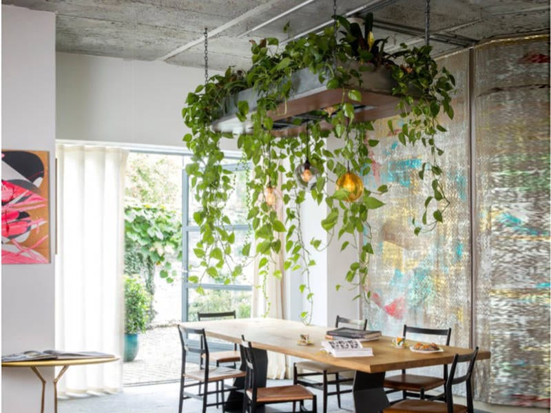 house plant ideas for the home