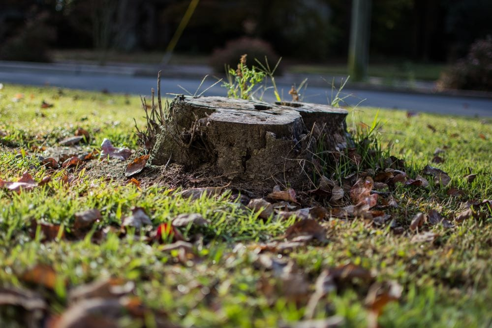 Lone tree stump in yard