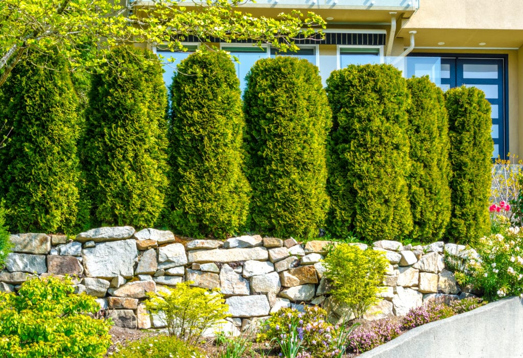 The 13 Best Backyard Plants to Grow for Privacy | MYMOVE