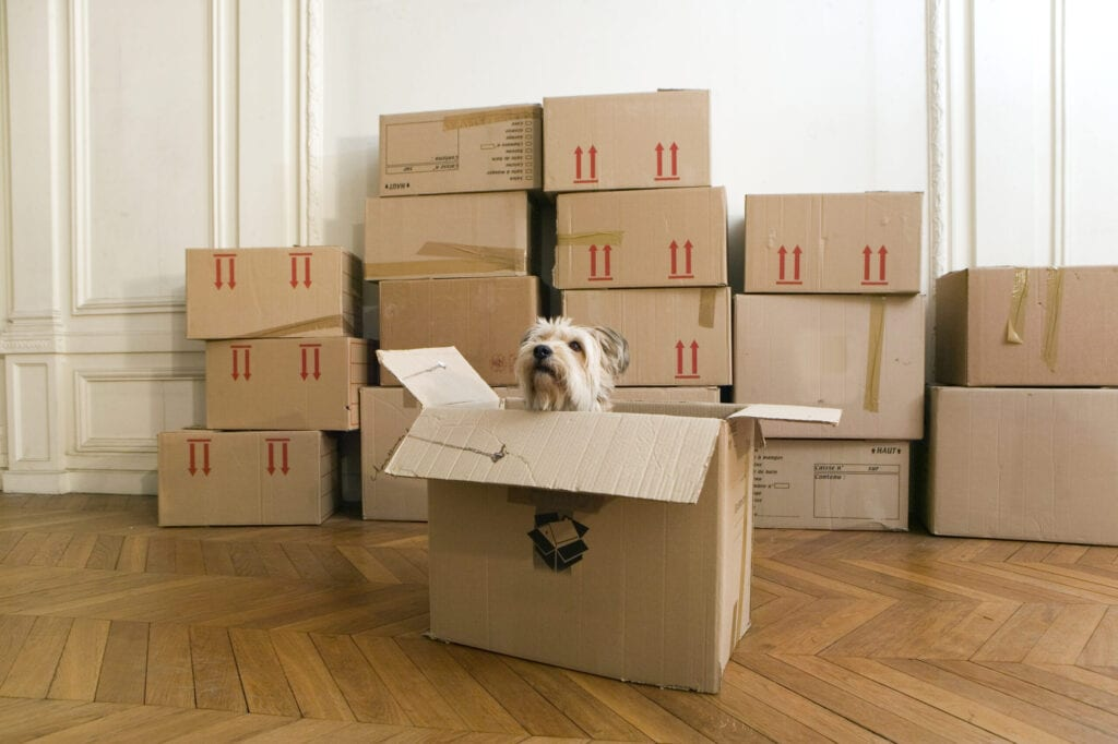 dog in box moving
