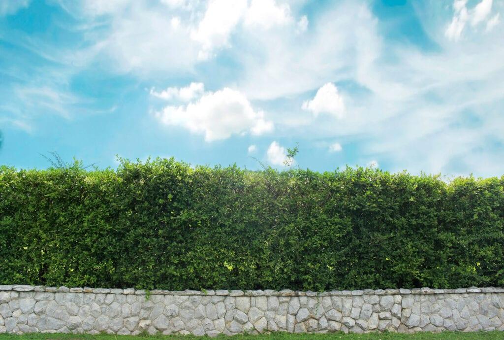 brick wall and ornamental shrub
