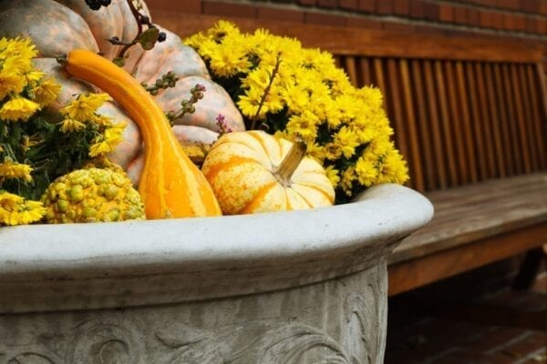 Pumpkin-themed planters