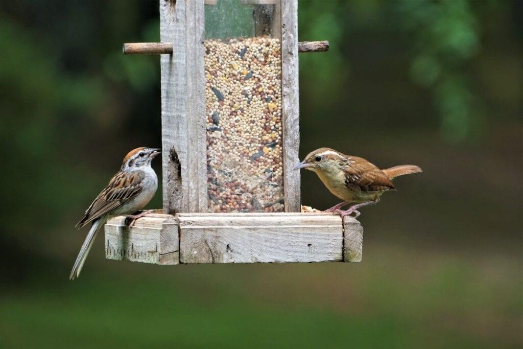 Two birds eating from homemade bird feeder