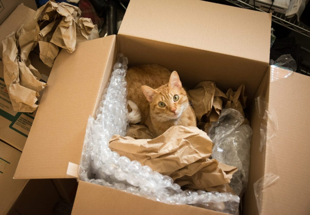 A cat in a moving box and surrounded by bubble wrap and packing paper looks up at the camera.