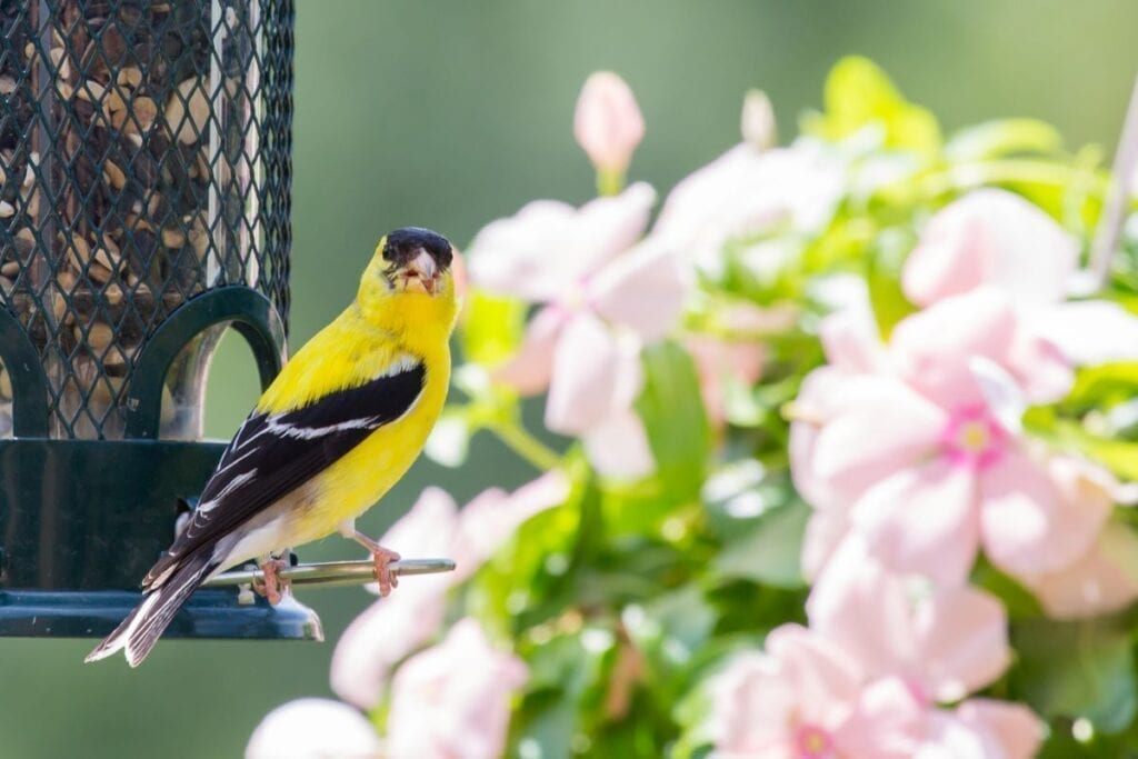 Using bird feeder to attract wildlife to backyard landscaping