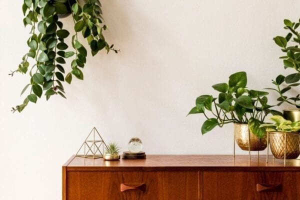 Indoor plants add a fresh touch to this home decor